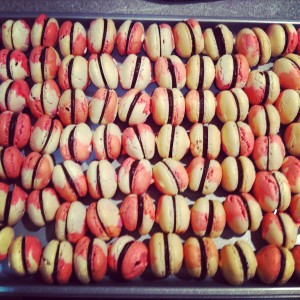 macaron bi-color